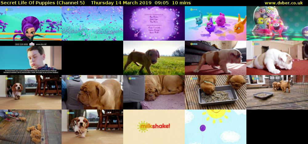 Secret Life Of Puppies (Channel 5) Thursday 14 March 2019 09:05 - 09:15