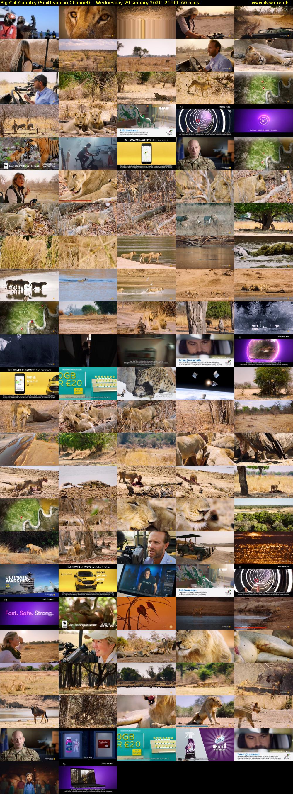 Big Cat Country (Smithsonian Channel) Wednesday 29 January 2020 21:00 - 22:00
