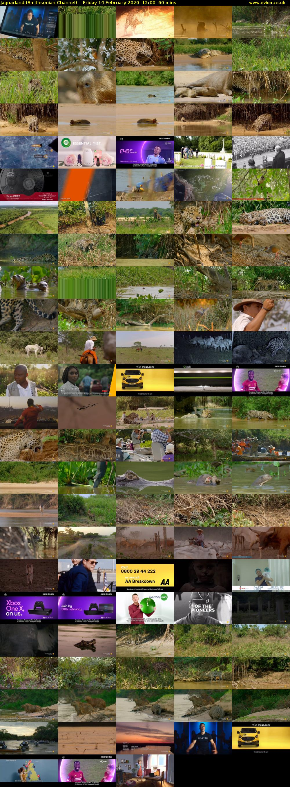 Jaguarland (Smithsonian Channel) Friday 14 February 2020 12:00 - 13:00